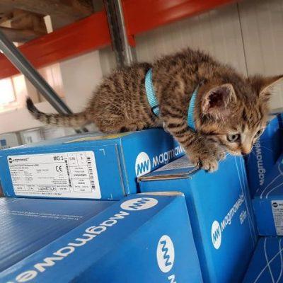 Babykatze schleicht über Schweißdrahtpackungen von Magmaweld