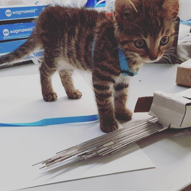 Babykatze beim WIG-Stäbe verpacken